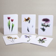 Set of 6 floral note cards for any occassion