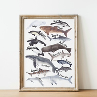 A3 whales, sharks and dolphins watercolour art print