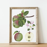 A4 apple watercolour art print