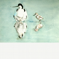 Avocet and young chick. Original watercolour.