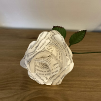 Harry Potter Rose