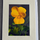 medium greetings cards - floral photographic