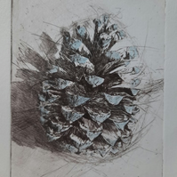 """Pine Cone"" Drypoint Print Limited Edition 2 of 6"