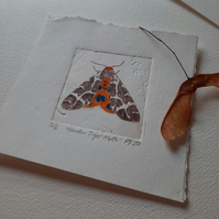 """Garden Tiger Moth"" Drypoint Print Limited Edition 5 of 6"