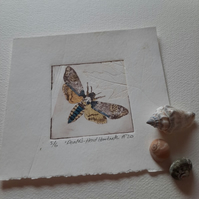 """Death's-Head Hawkmoth"" Drypoint Print Limited Edition 5 of 6"