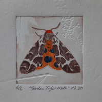 """Garden Tiger Moth"" Drypoint Print Limited Edition 6 of 6"