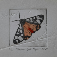"""Cream-Spot Tiger Moth"" Drypoint Print Limited Edition 6 of 6"