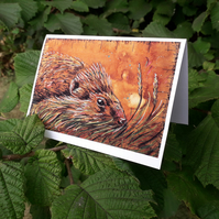 Cute Hedgehog Greetings Cards