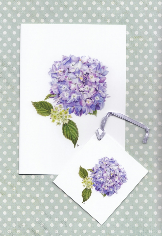 Blue Hydrangea Greetings Card and Gift Tag