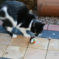 Cats Xmas Pudding Toy