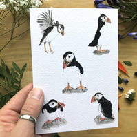 Puffin Card, Bird Card, Greetings Card, Blank Inside, Wildlife Card, Thank You