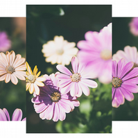A flower series - Print or Canvas