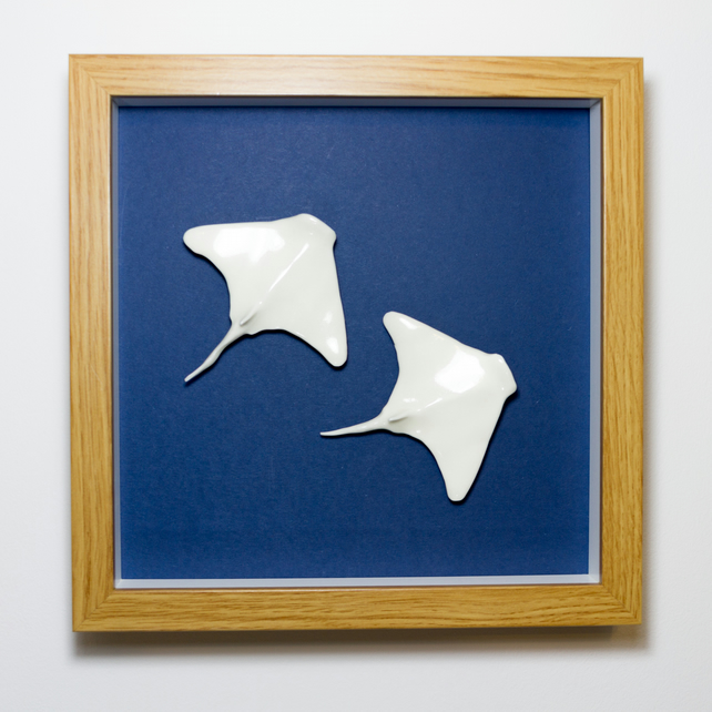Porcelain Swimming Fish - Two Rays - Box Framed Picture