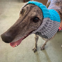 Greyhound or lurcher long, thick snood, neckwarmer for cooler temperatures