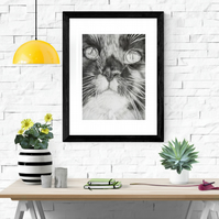 Giclee fine art print, limited edition, Maine Coon cat - MES