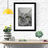 Giclee fine art print, limited edition, fluffy cat- APAP