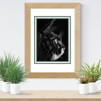 Giclee fine art print, limited edition, Maine Coon cat- CON
