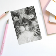 Greeting card, birthday card, cat, Maine Coon, blank cat card - MES