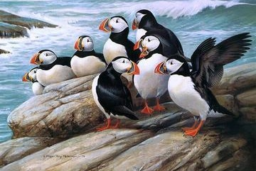PUFFINS  COLOURED CROSS STITCH KIT