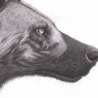 Painted African Wild Dog Printed Illustration