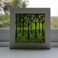 Amazing Fused Glass Woodland Picture 'Green Glow'