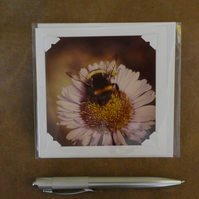 SALE - Bumble Bee 2 White Blank Card