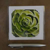 SALE - Succulent White Blank Card