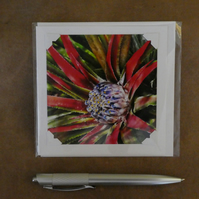 SALE - Fascicularia White Blank Card