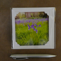 SALE - Bluebells White Blank Card