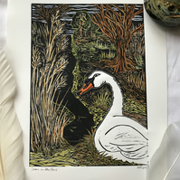 Hand coloured Swan in the Fens Linocut print