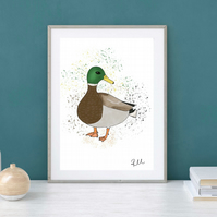 Duck Art, Illustration, Mallard Duck, Art Print, Duck, Art, Print, Unframed
