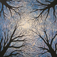 Acrylic Tree Painting, Looking Up, 16 X16 Inches on Canvas, by Chris Pointer
