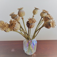 15 DRIED POPPY SEED HEADS - Home grown and prepared