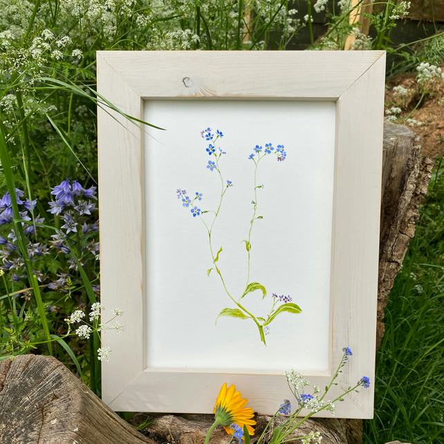 Forget-Me-Not Print, A4 Art Print, Delicate Blue Flower Print