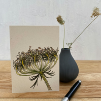 Wild Carrot Notecards - 5 blank cards with envelopes