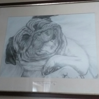 framed orinal pencil drawing of a laughing pug .