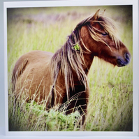 Horse Greeting Cards Blank Horse Greeting Card Horse Photography Cards Wildlife