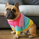 Dog Rainbow Knitted Jumper, dog clothes