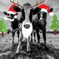 Cute Cow Christmas Card