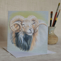 North Ronaldsay Ram with Magnificent Horns and Fleece greetings card