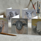 A Woolly Bunch Sheep Greetings Card Pack