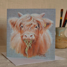 Blonde Highland Calf blank greetings card