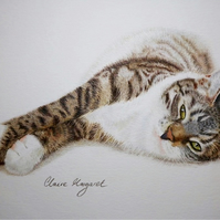 Sleepy Tabby Cat ORIGINAL Coloured Pencil Drawing