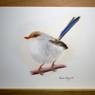 "Superb Fairy Wren  ORIGINAL ART  Pencil Drawing  8.3"" x 5.8"" by Claire Margaret"