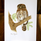 "Small Pygmy Owl   ORIGINAL ART Pencil Art 8.4"" x 5.8"" by Claire Margaret"