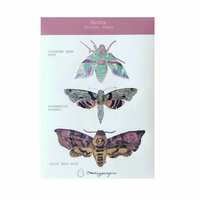 Illustrated Moth Sticker Sheet