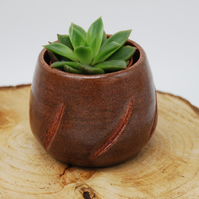 Brown with Pink Detail Plant Pot for Succulent or Cactus