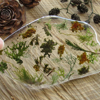 Moss in Resin Ornament - 'Reef'