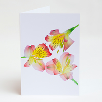 Notelets – Thank You Cards - Alstroemeria - Pack of 5 with Envelopes