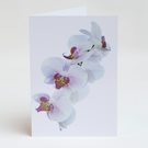 Notelets – Thank You Cards - Orchids - Pack of 5 with Envelopes
